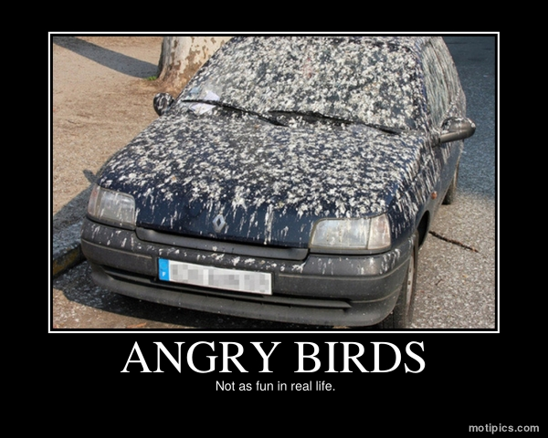 Angry Birds Motivational & Demotivational Photo