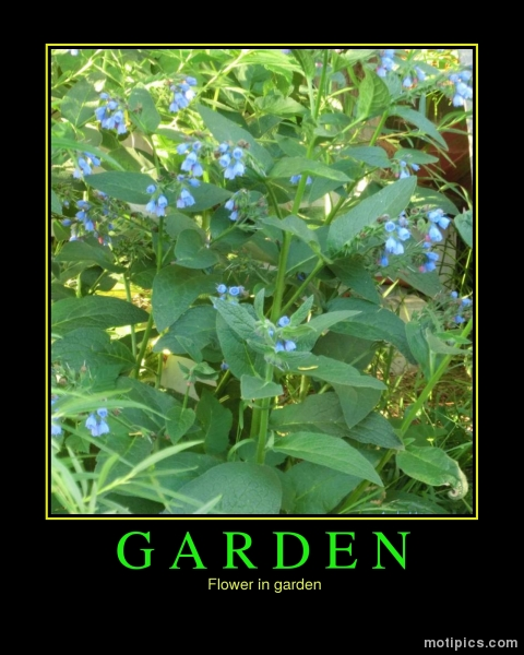 Garden Motivational & Demotivational Photo